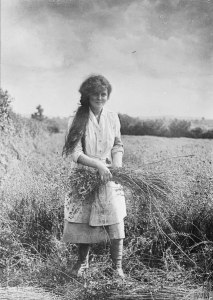 1915-1918 First world war land army girl pulling flax in Somerset