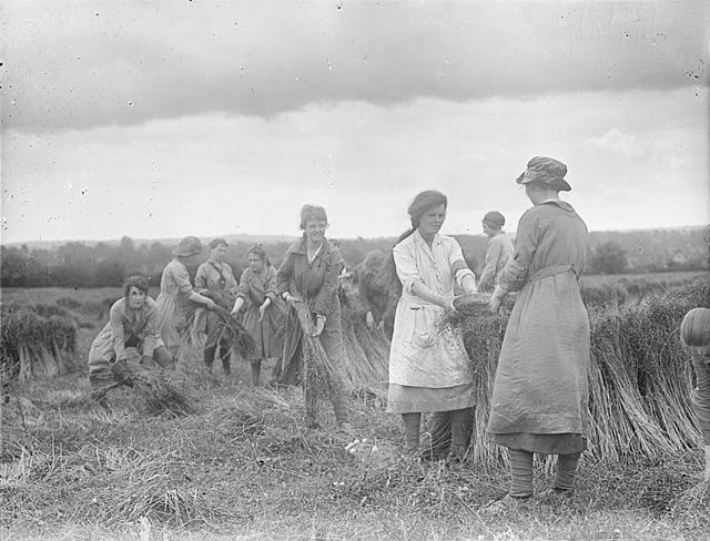 Ministry of Information First World War Official Collection College girls pulling flax in a field