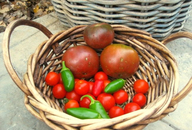 My 'harvest'