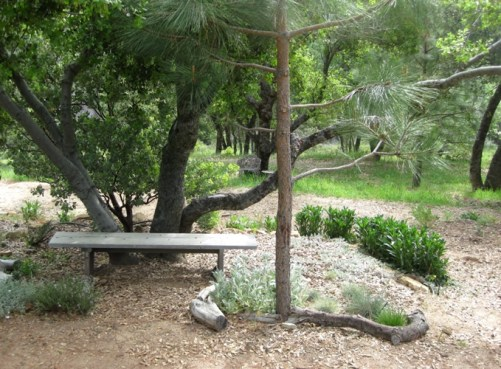 Set against a tree bench