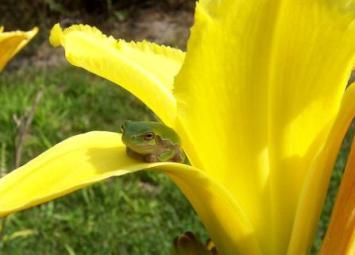 Susi Froggy