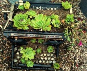 My typewriter planter