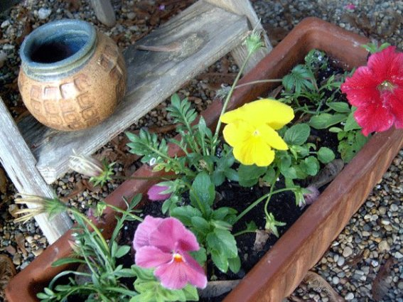 Julie Brown's Ladder and the planter that accents the bottom