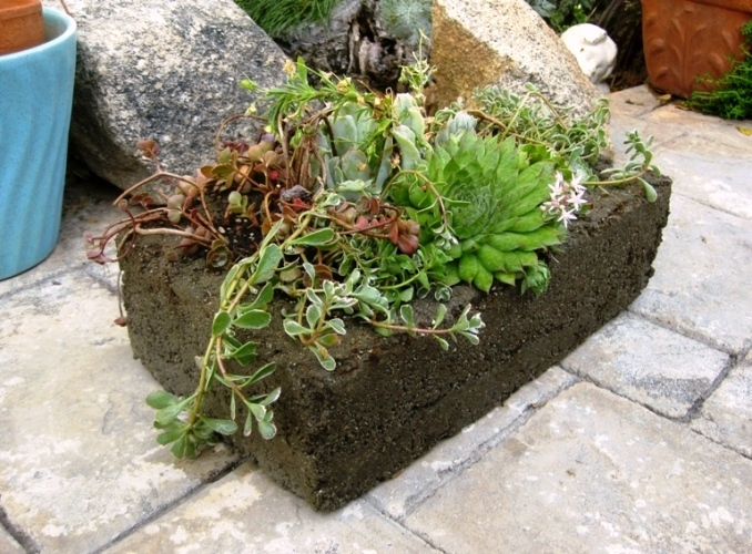 Stone-like hypertufa trough is a rustic choice as a succulent container