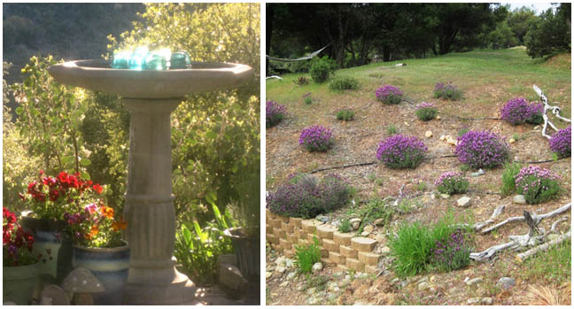 Magical birdbath and lavender garden