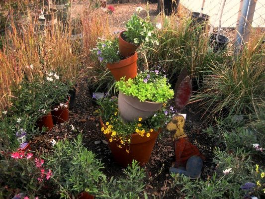 This is the little tipsy pot display made for the nursery,...violas and the spring green is golden oregano ~~ Sue