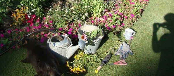 See Jane garden