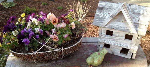 Barbara's garden