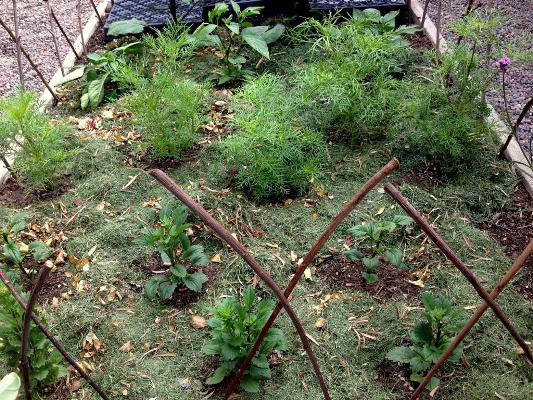 Use extra grass clippings in flower or veddie beds