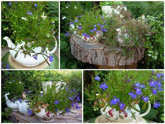 Charming Lobelia pots