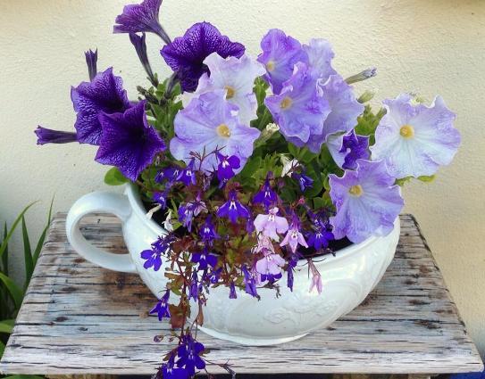 China planter with petunia and lobelia