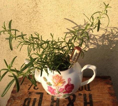 Rosemary teapot, with wine cork marker