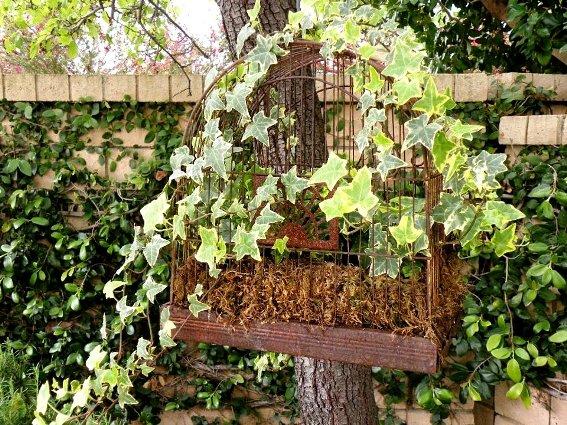 Cindy Barnes ivy laden birdcage