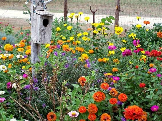 Debbie Schumann-Sowma's old-fashioned garden bed