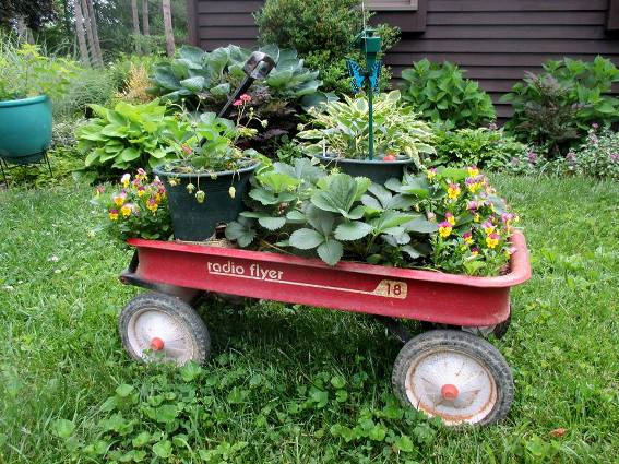 Jacki Kropf's granddaughter's strawberry garden