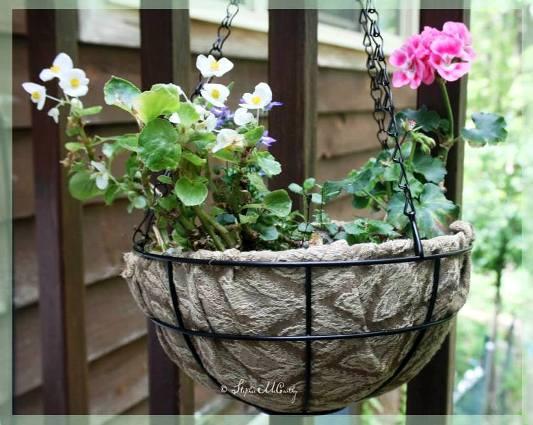 Stephie McCarthy's elegant hanging basket