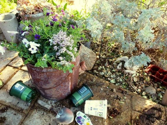 Planting a rusty bucket