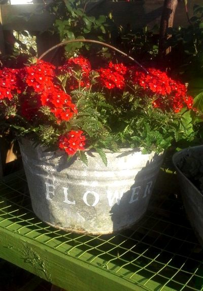 Billie Hayman's‎ long-lasting geraniums