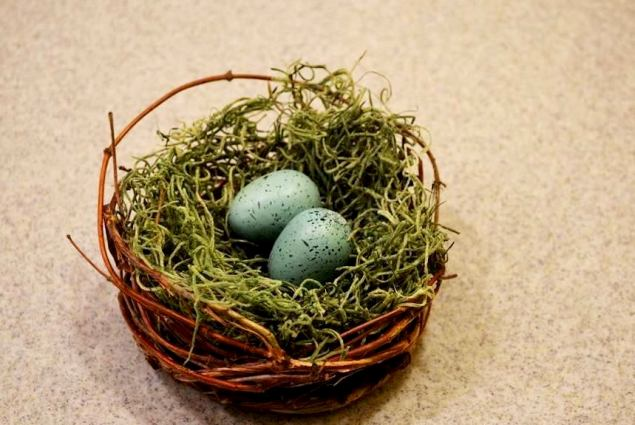 Christy Morrow's first try making a nestnest