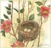 Stephy McCarthy nest