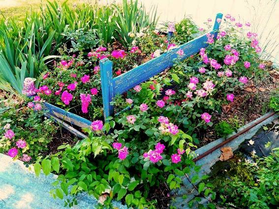 how to cover weeds with plastic and create pretty garden