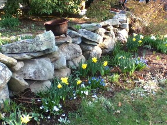 Spring flowers look lovely next to that stone wall