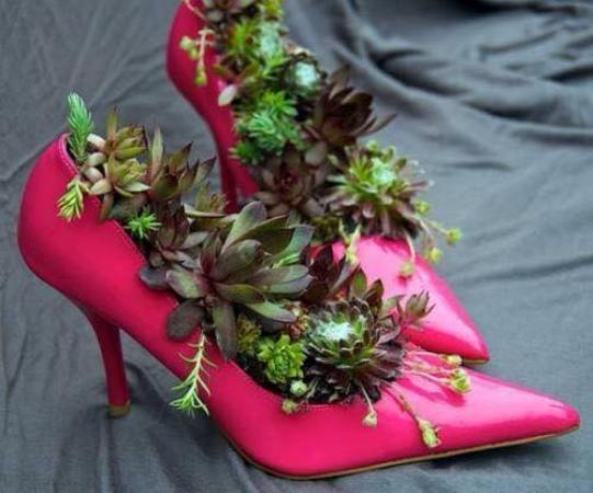 Elizabeth Williams's elegant hens and chicks