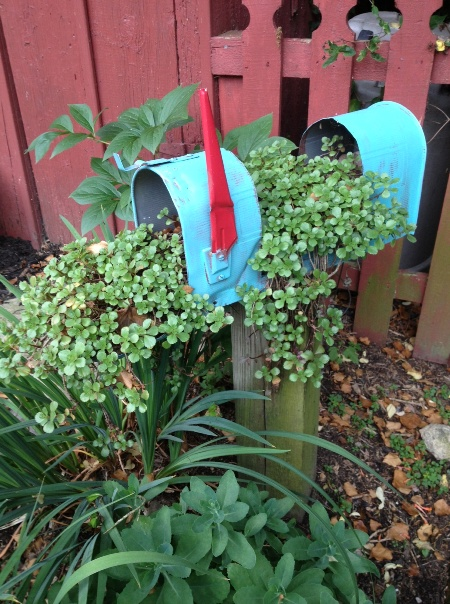 Myra Glandon's mailbox, this year
