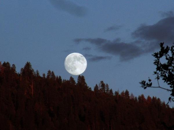 Moon Gardens 14