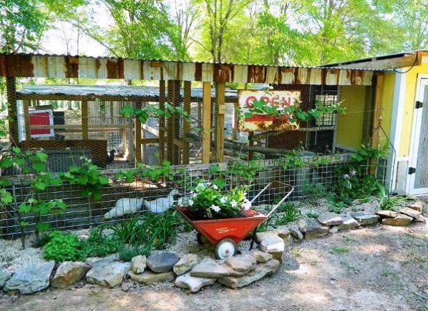 Dandi Gentry's chicken coop garden (12)