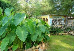 Dandi Gentry's chicken coop garden (29)