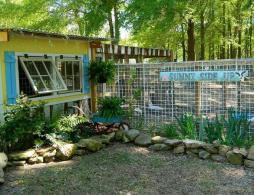 Dandi Gentry's chicken coop garden (8)