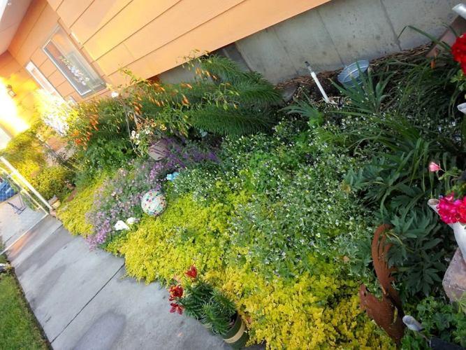 Kathy Plettenberg's wide flower border