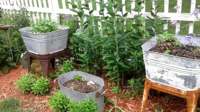 Rhonda Duchesneau galvanized tub garden