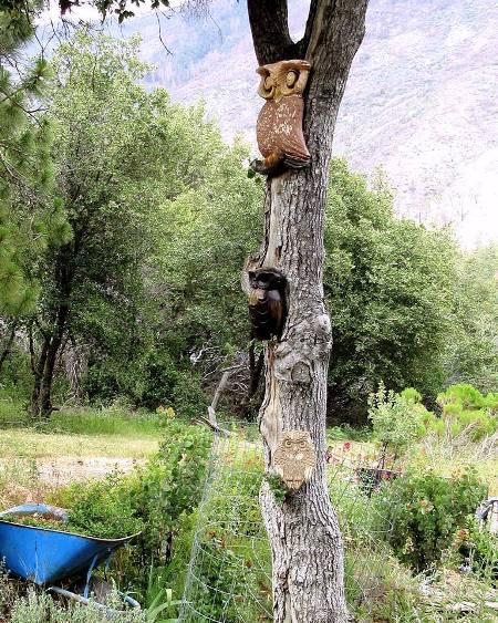My owl tree ~~ Sue Langley