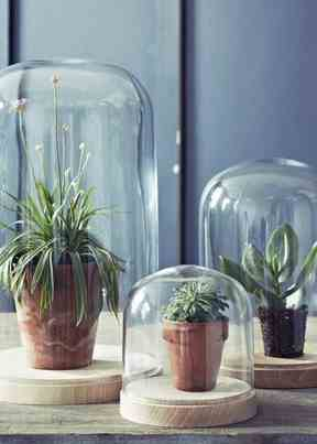 Glass Cloches domes 019