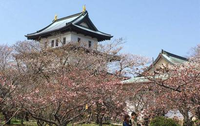 Matsumae Sakura Festival Start on April 29 2015