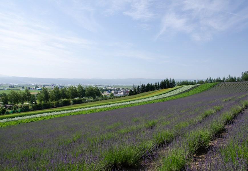 Farm Tomita, the leading tourist farm in Hokkaido.