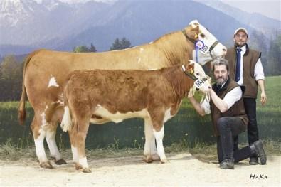 Reserve National Champion female 2016: MIA FVF Pp (Gigant DE x Raudi AT) dob: 26.05.2010, cowcalf MELLY (S: Campari DK), dob: 13.11.2015 , Family Weishaupt, Preitenegg, KR, Foto: Stephan Hauser