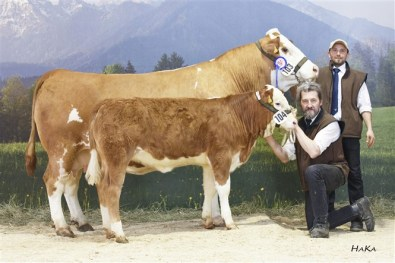 Reserve National Champion female 2016: MIA FVF Pp (Gigant DE x Raudi AT) dob: 26.05.2010, cowcalf MELLY (S: Campari DK), dob: 13.11.2015 , Family Weishaupt, Preitenegg, KR, Foto: Stephan Hauser