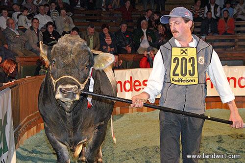 Anton Achammer mit dem Tiroler Grauvieh Bundessieger und Superchampion heimische Rassen: DINKEVUS (V: Dinkos AT) (Foto: Landwirt.com)
