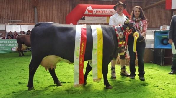 Kühe Gesamt- und Eutersiegerin Alma (Samba) von Marco Kaufmann aus Tobadill