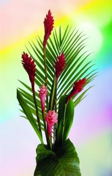 Photos Fleurs Exotiques Guadeloupe