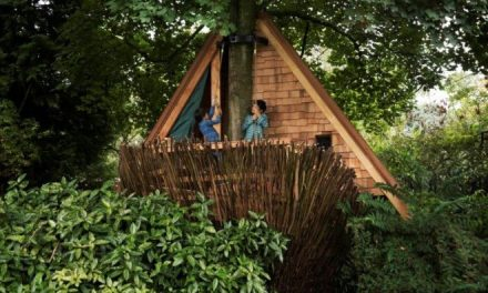 Kwartaalwinnaars TomDavidArchitecten (2015) presenteren boomhut bij Fleur Groenendijk