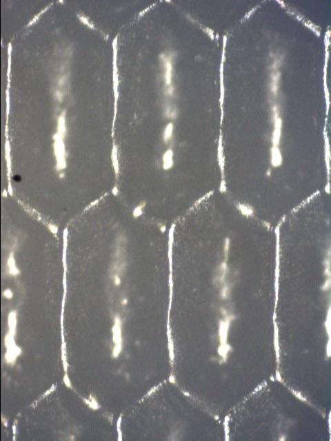 Apex North America McBeth 001181-vertical
