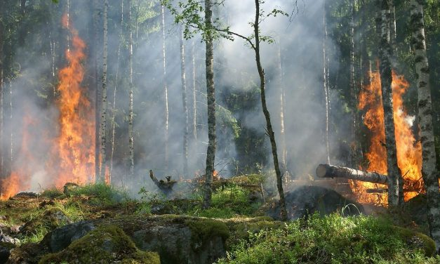 Why Wildfires Are Necessary