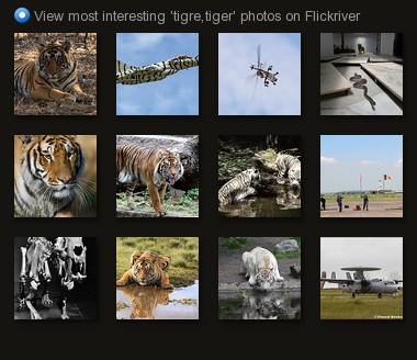 View most interesting 'tigre,tiger' photos on Flickriver