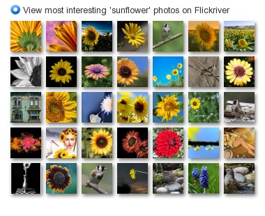 View most interesting 'sunflower' photos on Flickriver
