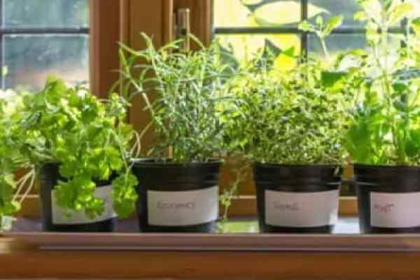 Herbs That Flies Hate
