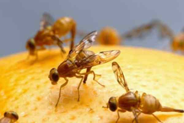 What Are Flies Attracted To